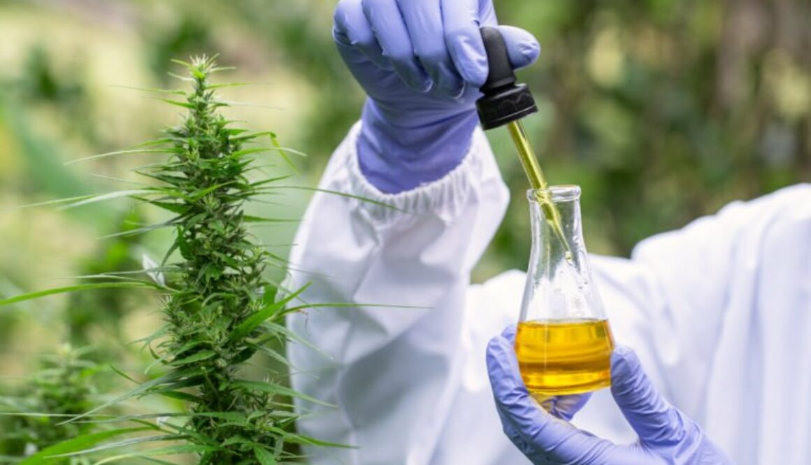 Finest CBD Oil Business: Top 5 Brand names in 2020