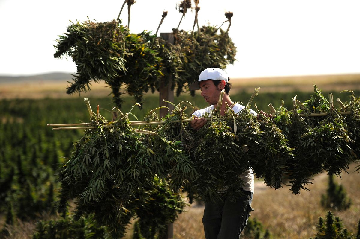 """""""Marijuana Deals With COVID-19"""" Rallied Weed Stocks. Marijuana Might Help Pandemic– If Somebody Pays To Discover."""
