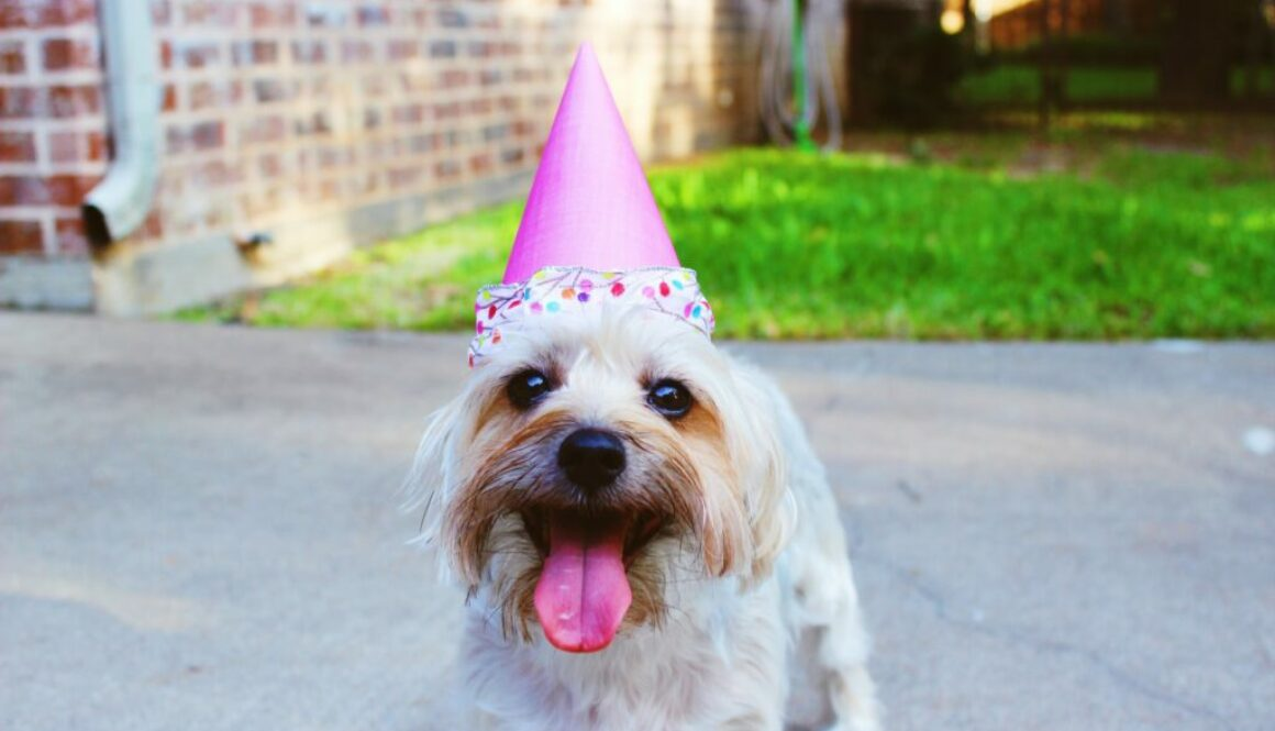 How To Enhance Your Canine's Quality Of Life